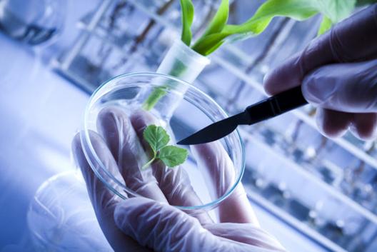 I brevetti nel campo chimico e farmaceutico