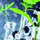 La brevettazione delle nuove varietà vegetali